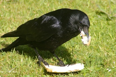ps - raven